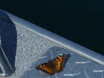Butterfly Hatch